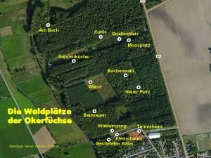 Die Waldplätze der Okerfüchse